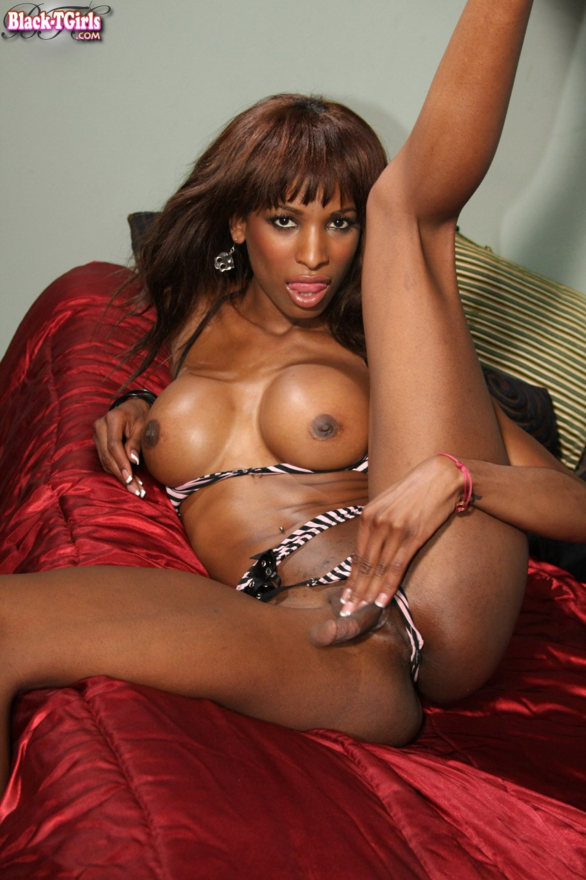 from Titus black transsexuals tgp